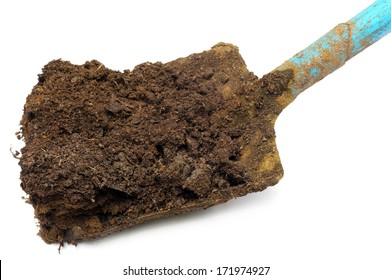 Cow manure on a shovel over white background