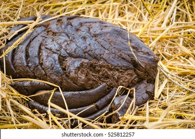 Image result for cow pies picture