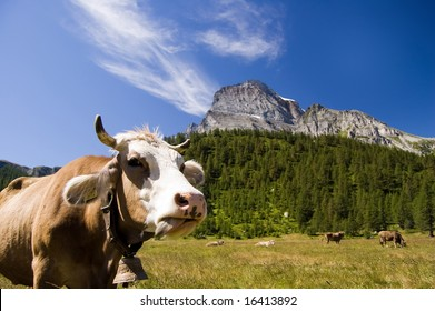 Cow in natural park