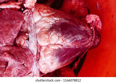 cow offal in a container, cow heart,