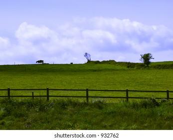 cow on the edge