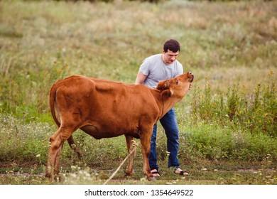 Cow on the farm