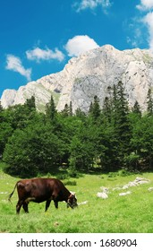 Cow on meadow. Mountain landscape and a cow. Nature concept
