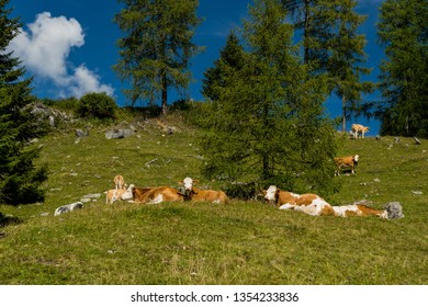 cow pasture on the alm