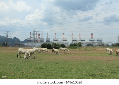 cow and power station