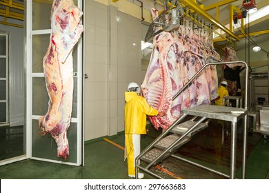 Cow Production Line In A Slaughterhouse And Refrigeration Room Employees Assisting The Process