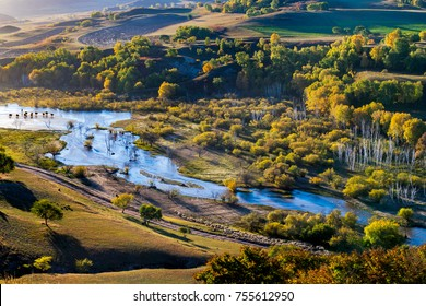 Cow and sheep across the river on Bashang grassland at Inner Mongolia.