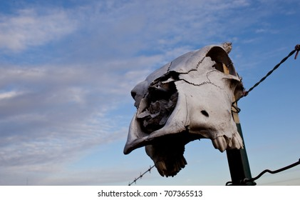A cow skull resting on a metal fencepost against a blue sky with white clouds
