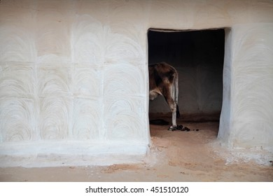 Cow in a stable in India