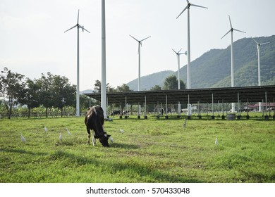 Cow standing on the meadow and wind turbine with Mountain Background.