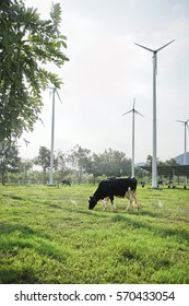 Cow standing on the meadow and wind turbine with Sunlight.