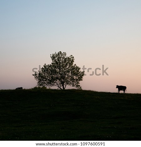 A cow at the tree