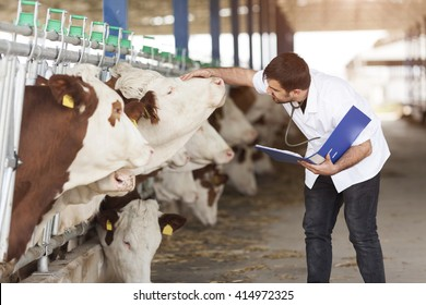 Cow Veterinary