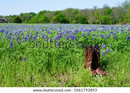 f15aa04f3afa Cowboy boots and Bluebonnet flowers during spring time around Texas Hill  Country