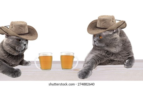 Cowboy cats drinking beer