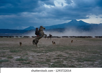 Horse Quotes Images, Stock Photos & Vectors | Shutterstock