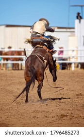 Cowboy rides a bucking bronc horse in a country rodeo event