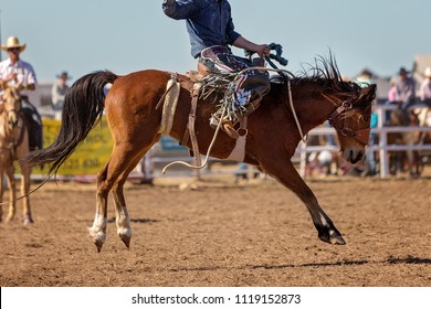 A cowboy riding a bucking horse in the saddle bronc event at a country rodeo