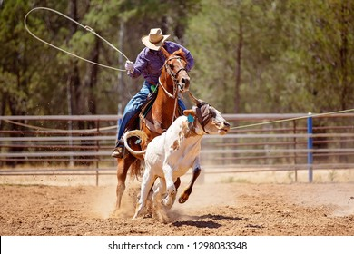 A cowboy riding a horse trying to lasso a running calf during a team event at a country rodeo