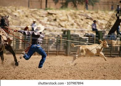 Cowboy roping calf in rodeo