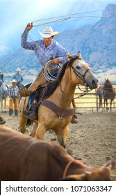 A Cowboy roping cattle