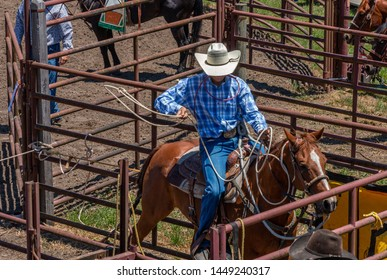 A cowboy is sitting on his saddled horse in a corral. He is waiting for a calf roping contest. He has a white hat, lasso, and tie down ropes. He is preparing the lasso to throw over the calf's horns.