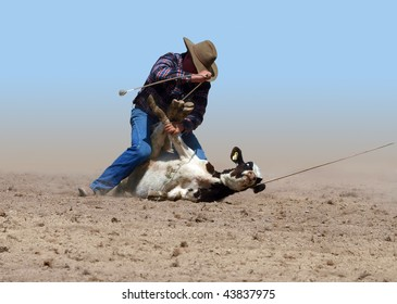 Cowboy Successfully Tying a Calf with a piggin' string isolated with clipping path