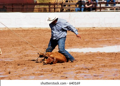 A cowboy throws a steer in a muddy rodeo arena.