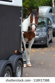 Cowboy trail horse waiting by a horsebox