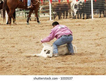 Cowboy vs steer during a rodeo bulldogging event.