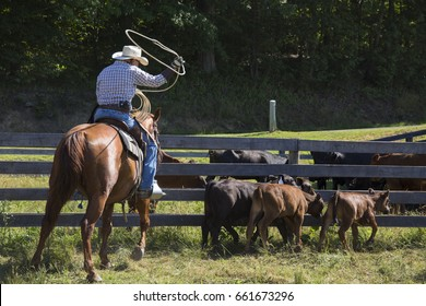 Cowboy in western wear on a horse using a rope