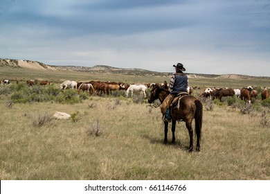Cowboy wrangler ranch hand on horse watching over horse herd as they graze on prairie