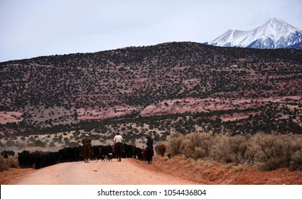 cowboys herding cattle in remote utah, near moab, with a mountain backdrop