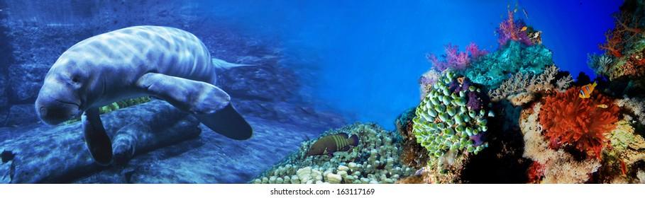 Cow-fish. Underwater world. Panorama.