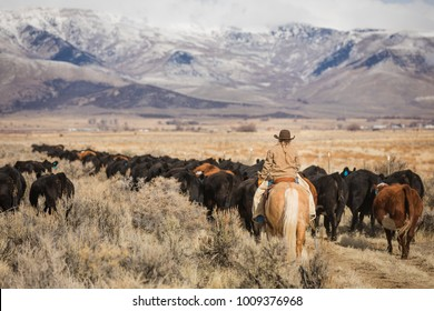 Cowgirl riding her horse outside while moving a herd of cows with snow capped mountains and clouds in the distance.