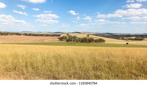 Cowra in the Central West of New South Wales has very good agricultural land for both cropping and raising animals. Cowra NSW Australia.