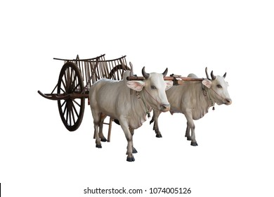 Cows with cart on white background