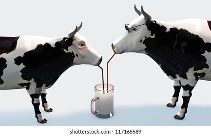cows drinking milk isolated on white background