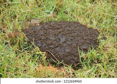 Cow's dung on the ground,Manure made from cow dung, organic fertilizer.
