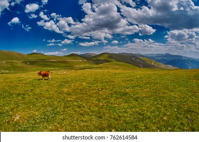 Cows eating fresh grass in mountain valley under dramatic blue sky
