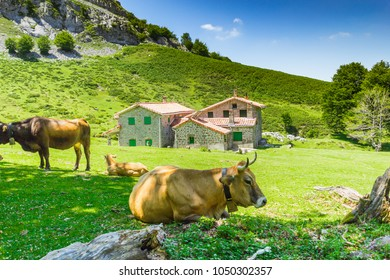 Cows enjoying the good weather and eating in the Gorbea Natural Park, Basque Country, Spain