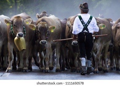 Cows and farmer on a road