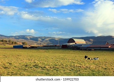 Cows graze at a dairy farm in rural Utah with a red barn, USA.
