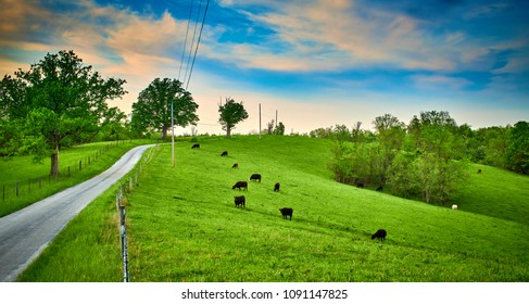 Cows Grazing Along Counrty Road