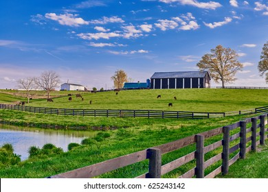 Cows Grazing in Field with Barns