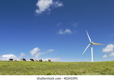 Cows grazing in green meadow next to a wind turbine, alternative energy, electricity generation