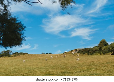 Cows grazing on grassy field on a bright sunny day. Normandy, France. Cattle breeding and industrial agriculture concept. Summer countryside landscape and pastureland for domesticated livestock