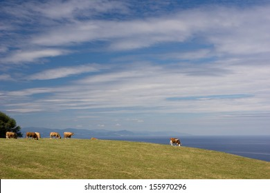 Cows in green meadow by the sea.