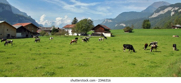 Cows in a green pasture in the mountains