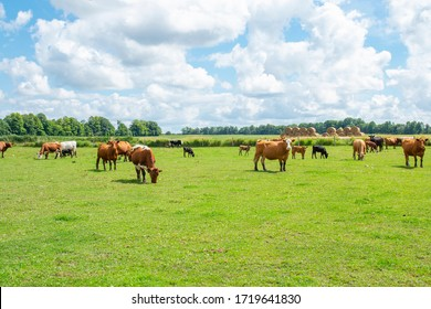 A lot of Cows on a farm under the beautiful sky and clouds